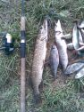 Рыбалка_удалась_.jpg
